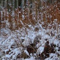 Снежный ковёр. :: Paparazzi