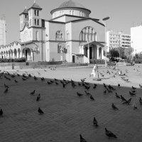 Черное и белое. :: Оля Богданович