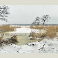 Первый снег :: Николай Капранов