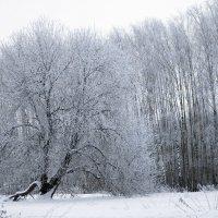 Зима торжествует :: Михаил Кондратенко