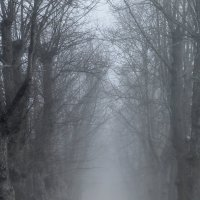 Весна.... :: Юрий Цыплятников