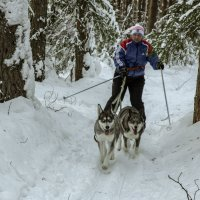 Встреча на лыжне. :: Наталья