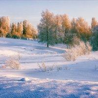 У леса на опушке... :: Александр Никитинский