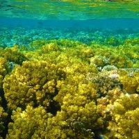 Заросли мягкого коралла... :: Sergey Gordoff