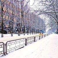 Зима с Декабрём свой неспешный ведёт разговор . :: Валентина ツ ღ✿ღ