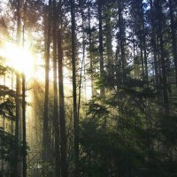 Солнце в лесу :: Alena Nuke