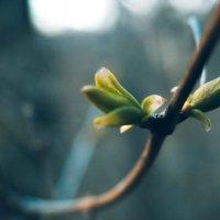 Весна... :: Jack Wall
