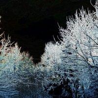 Зима :: Виктория Нефедова