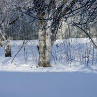 Зимний сад :: Леонид Железнов
