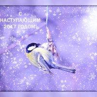 Зимнее настроение :: Татьяна Евдокимова