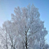 Зимняя краса. :: Михаил Столяров