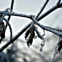 Снежинки... :: Михаил Столяров