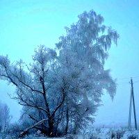 Утренний декабрьский морозный  туман. :: Михаил Столяров