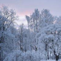 Зима-зима :: Наталия П