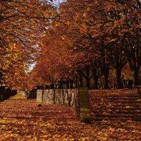 Осень :: Дмитрий Близнюченко