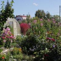 В саду :: Олег Афанасьевич Сергеев