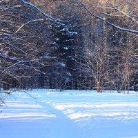 В зимнем парке :: Татьяна Ломтева
