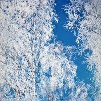 Серебро зимы :: Валерий Талашов