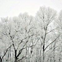 Декабрь. :: Михаил Столяров