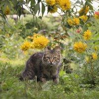 В цветочных джунглях :: И.В.К. ))