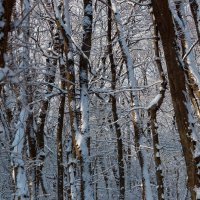 Зима в лесу :: Николай Николенко