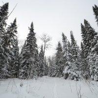 зима 6 :: Константин Трапезников