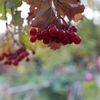 Осень :: Ириника