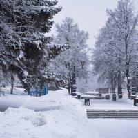 Деревья укутались в зимнее одеяло :: Павел Trump