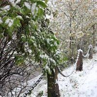 Утро первого снега :: Ольга