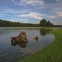 Половодье на сибирской реке... :: Александр Попов