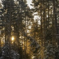 Морозное утро :: Алексей Строганов