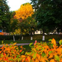 Роскошная осень :: Albina