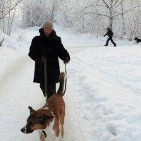 Холод собачий :: Александр Алексеев