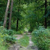 лесными дорогами :: оксана