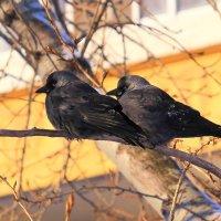 Слишком холодно на дворе, зря любовь пришла в декабре :: Татьяна Ломтева