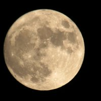 луна,луна :: Евгений Гузов
