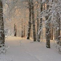 Зима зима :: Виктор Бондаренко