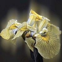 Цветок :: Александр Михайлов
