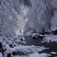 Зима ... :: Serega Денисенко