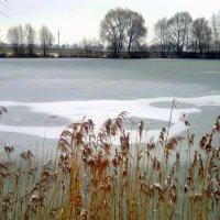 замерзший пруд :: Александр Прокудин