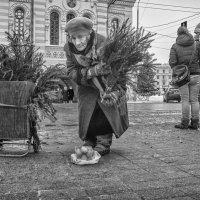 Купите ёлку... :: Владимир Голиков