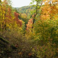 Осень :: Людвикас Масюлис