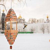 московские птицы :: Олеся Семенова