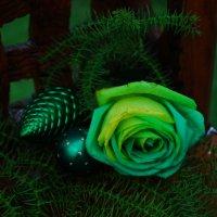 Новогодняя роза. :: Лара Гамильтон