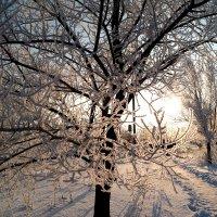 Зима рисует.. :: Андрей Заломленков