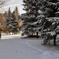 Зимние зарисовки. :: владимир