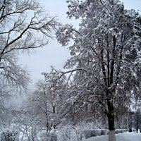 Зима :: Елена Семигина