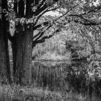 Дубы у озера :: Анна Вязникова