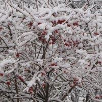 Зима :: Елена Безнасюк