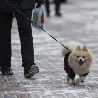 На прогулке :: Александр Степовой